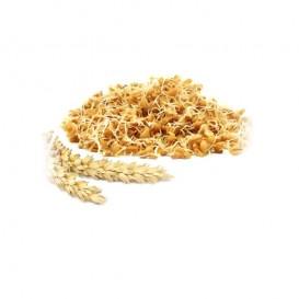پودر جوانه گندم سنتی ناب 500 گرمی